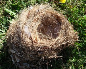 cropped-birds-nest-274582_6401.jpg