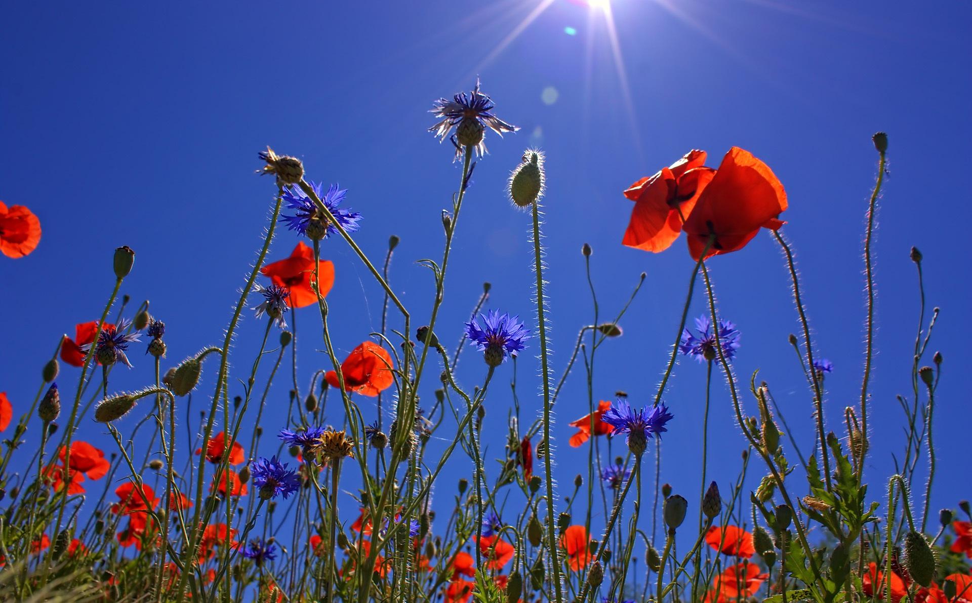 landscape-nature-blossom-light-plant-sky-718809-pxhere.com